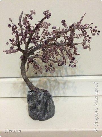 деревца фото 1