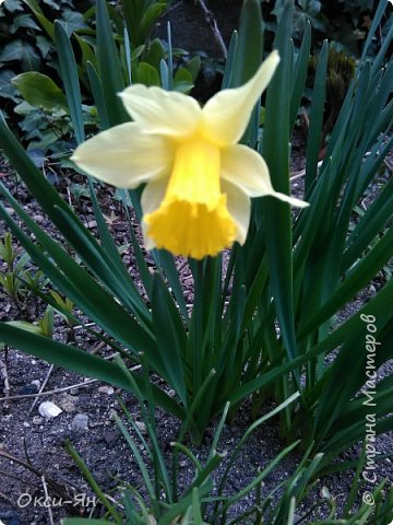 Сижу дома.На улице -5 и холодно.А днем сделала фотографии в моем дворе и думала что уже весна.Хочу поздравить всех с наступающей весной,ведь природу не обманешь. фото 1