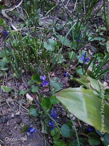 Сижу дома.На улице -5 и холодно.А днем сделала фотографии в моем дворе и думала что уже весна.Хочу поздравить всех с наступающей весной,ведь природу не обманешь. фото 3
