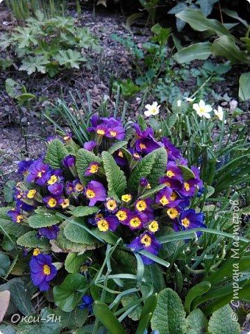 Сижу дома.На улице -5 и холодно.А днем сделала фотографии в моем дворе и думала что уже весна.Хочу поздравить всех с наступающей весной,ведь природу не обманешь. фото 4