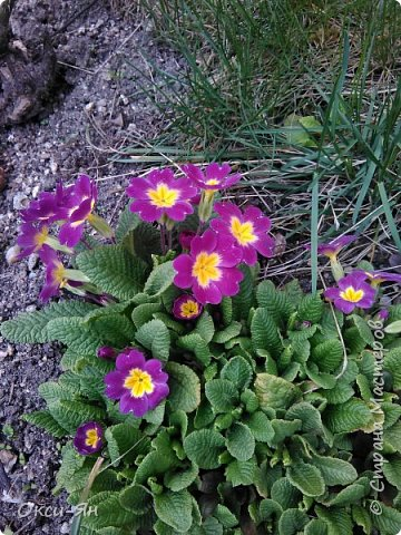 Сижу дома.На улице -5 и холодно.А днем сделала фотографии в моем дворе и думала что уже весна.Хочу поздравить всех с наступающей весной,ведь природу не обманешь. фото 5