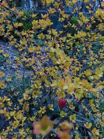 Сижу дома.На улице -5 и холодно.А днем сделала фотографии в моем дворе и думала что уже весна.Хочу поздравить всех с наступающей весной,ведь природу не обманешь. фото 6