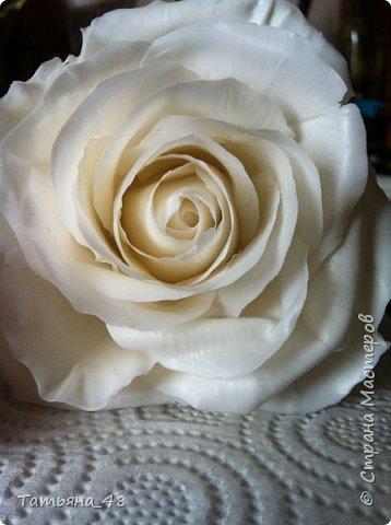 Привет всем. с опозданием  пишу комментарии. Это моя первая полноразмерная роза слепленная  по МК Татьяны Карелиной!!!! Есть масса ошибок и недочетов, но в общем результатом довольна. Следущая будет лучше..... А теперь просмотр фоток...... фото 2