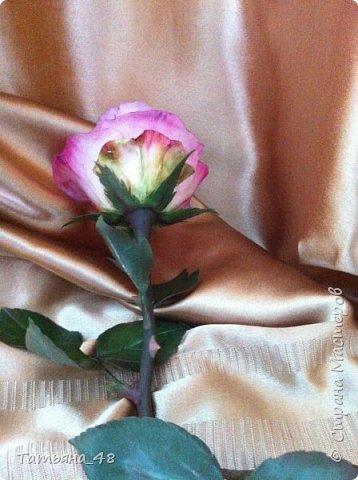 Привет всем. с опозданием  пишу комментарии. Это моя первая полноразмерная роза слепленная  по МК Татьяны Карелиной!!!! Есть масса ошибок и недочетов, но в общем результатом довольна. Следущая будет лучше..... А теперь просмотр фоток...... фото 6