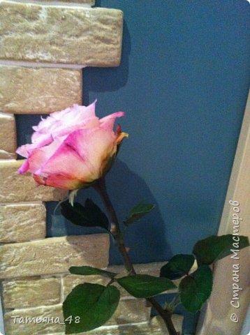 Привет всем. с опозданием  пишу комментарии. Это моя первая полноразмерная роза слепленная  по МК Татьяны Карелиной!!!! Есть масса ошибок и недочетов, но в общем результатом довольна. Следущая будет лучше..... А теперь просмотр фоток...... фото 8