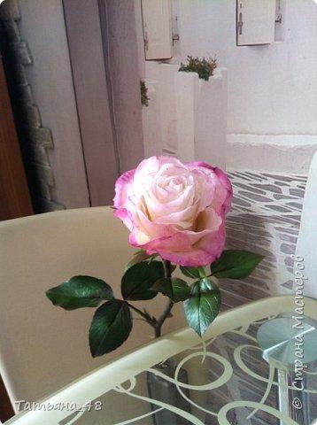 Привет всем. с опозданием  пишу комментарии. Это моя первая полноразмерная роза слепленная  по МК Татьяны Карелиной!!!! Есть масса ошибок и недочетов, но в общем результатом довольна. Следущая будет лучше..... А теперь просмотр фоток...... фото 1