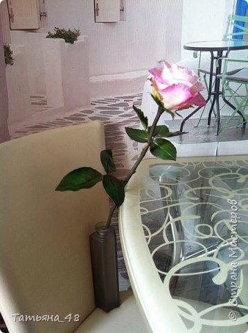 Привет всем. с опозданием  пишу комментарии. Это моя первая полноразмерная роза слепленная  по МК Татьяны Карелиной!!!! Есть масса ошибок и недочетов, но в общем результатом довольна. Следущая будет лучше..... А теперь просмотр фоток...... фото 10