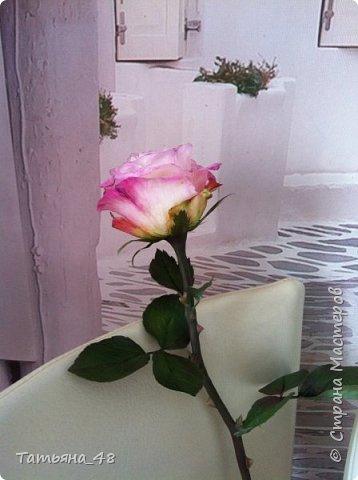 Привет всем. с опозданием  пишу комментарии. Это моя первая полноразмерная роза слепленная  по МК Татьяны Карелиной!!!! Есть масса ошибок и недочетов, но в общем результатом довольна. Следущая будет лучше..... А теперь просмотр фоток...... фото 11