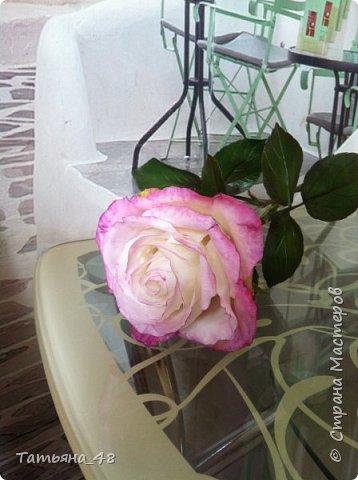 Привет всем. с опозданием  пишу комментарии. Это моя первая полноразмерная роза слепленная  по МК Татьяны Карелиной!!!! Есть масса ошибок и недочетов, но в общем результатом довольна. Следущая будет лучше..... А теперь просмотр фоток...... фото 12