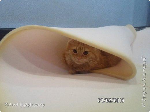 Приветствую всех жителей СМ. Наш любимец - Крысилий очень любит всякие коробки, пуфики и диваны, вот решила сотворить ему свой собственный. это мой первый кошачий дом. размер: Длина - 53см, высота - 55 см, ширина - 32 см. фото 5