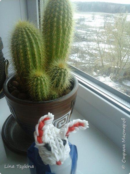Всем привет! Сегодня я хочу познакомить вас с Владленой  - сестрёнкой Лапочки Анкета: Имя Владлена Дата рождения 20.03.16 Любимая еда морковь фото 3