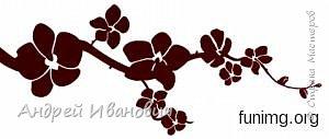 Японское дерево сакура она же вишня мелкопильчатая, сакура это не простое обычное дерево, сакура это дерево символ, в первую очередь символ Японии, и конечно же символ красоты и юности. Существует около 16 видов и примерно 400 сортов  сакуры, сакуру можно встретить везде в Японии фото 7