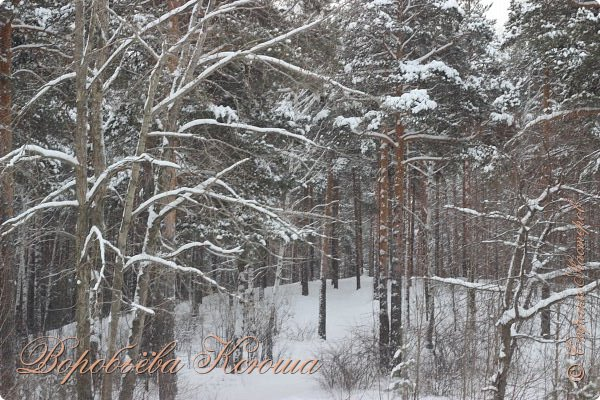 Доброго времени суток друзья. Сегодня я наконец то выложила свои зимние фотографии этого года. Приятного просмотра! фото 5