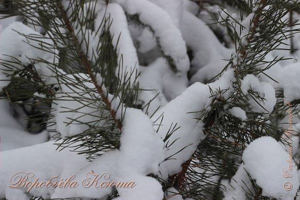 Доброго времени суток друзья. Сегодня я наконец то выложила свои зимние фотографии этого года. Приятного просмотра! фото 3