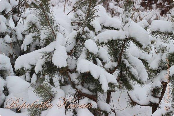Доброго времени суток друзья. Сегодня я наконец то выложила свои зимние фотографии этого года. Приятного просмотра! фото 4