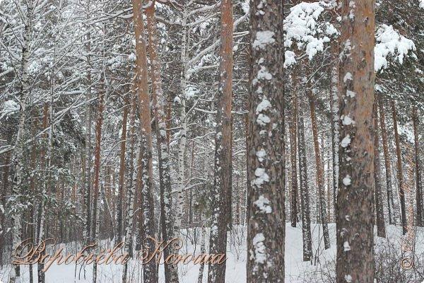 Доброго времени суток друзья. Сегодня я наконец то выложила свои зимние фотографии этого года. Приятного просмотра! фото 7