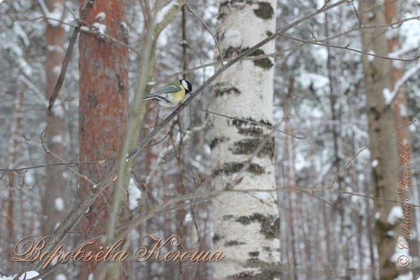 Доброго времени суток друзья. Сегодня я наконец то выложила свои зимние фотографии этого года. Приятного просмотра! фото 35