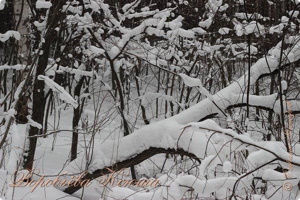 Доброго времени суток друзья. Сегодня я наконец то выложила свои зимние фотографии этого года. Приятного просмотра! фото 8