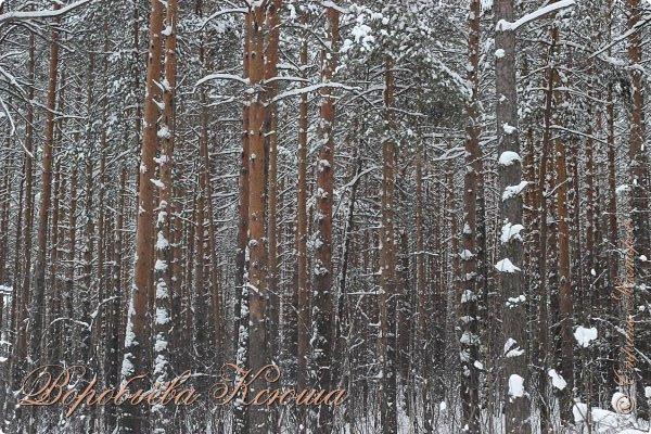 Доброго времени суток друзья. Сегодня я наконец то выложила свои зимние фотографии этого года. Приятного просмотра! фото 9