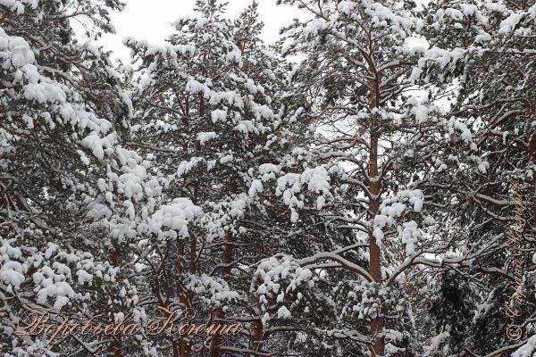 Доброго времени суток друзья. Сегодня я наконец то выложила свои зимние фотографии этого года. Приятного просмотра! фото 2