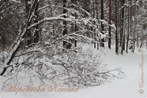 Доброго времени суток друзья. Сегодня я наконец то выложила свои зимние фотографии этого года. Приятного просмотра! фото 10