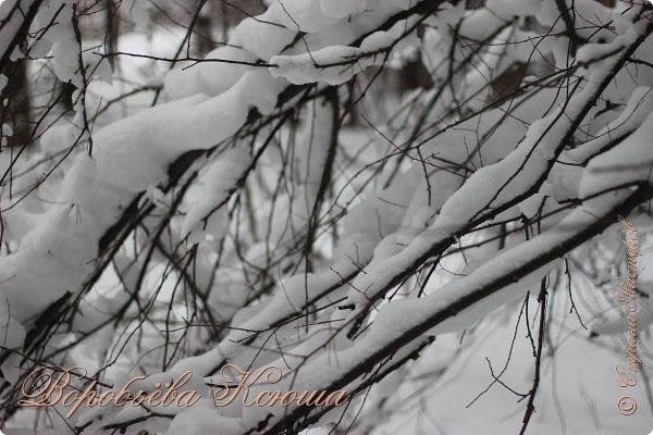 Доброго времени суток друзья. Сегодня я наконец то выложила свои зимние фотографии этого года. Приятного просмотра! фото 12