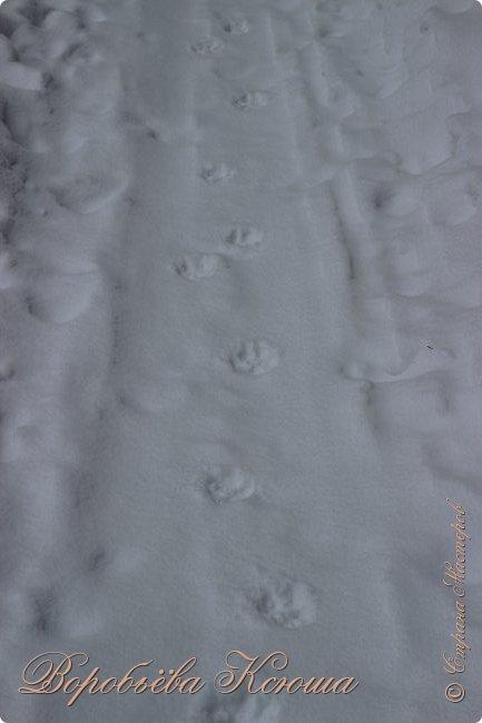 Доброго времени суток друзья. Сегодня я наконец то выложила свои зимние фотографии этого года. Приятного просмотра! фото 18