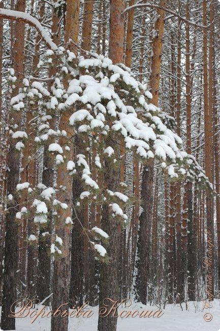 Доброго времени суток друзья. Сегодня я наконец то выложила свои зимние фотографии этого года. Приятного просмотра! фото 17