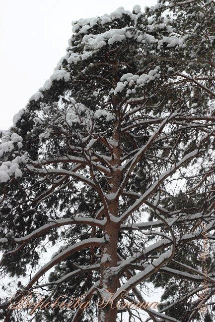 Доброго времени суток друзья. Сегодня я наконец то выложила свои зимние фотографии этого года. Приятного просмотра! фото 21