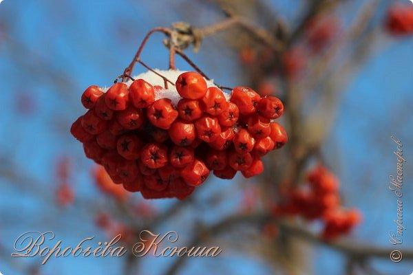 Доброго времени суток друзья. Сегодня я наконец то выложила свои зимние фотографии этого года. Приятного просмотра! фото 22