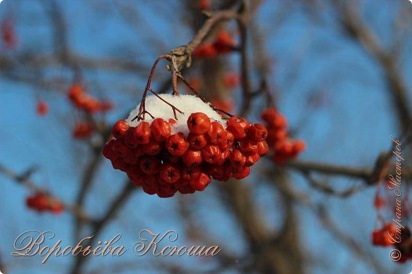 Доброго времени суток друзья. Сегодня я наконец то выложила свои зимние фотографии этого года. Приятного просмотра! фото 23
