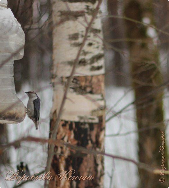 Доброго времени суток друзья. Сегодня я наконец то выложила свои зимние фотографии этого года. Приятного просмотра! фото 38