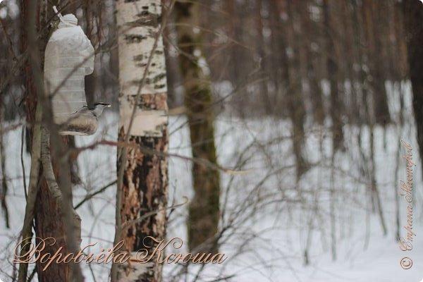 Доброго времени суток друзья. Сегодня я наконец то выложила свои зимние фотографии этого года. Приятного просмотра! фото 37