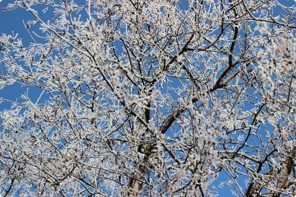 Доброго времени суток друзья. Сегодня я наконец то выложила свои зимние фотографии этого года. Приятного просмотра! фото 40
