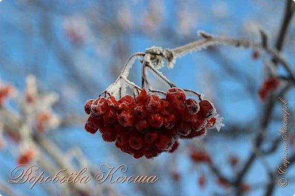 Доброго времени суток друзья. Сегодня я наконец то выложила свои зимние фотографии этого года. Приятного просмотра! фото 24
