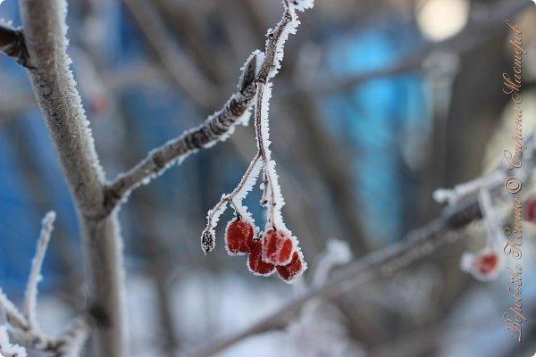 Доброго времени суток друзья. Сегодня я наконец то выложила свои зимние фотографии этого года. Приятного просмотра! фото 44