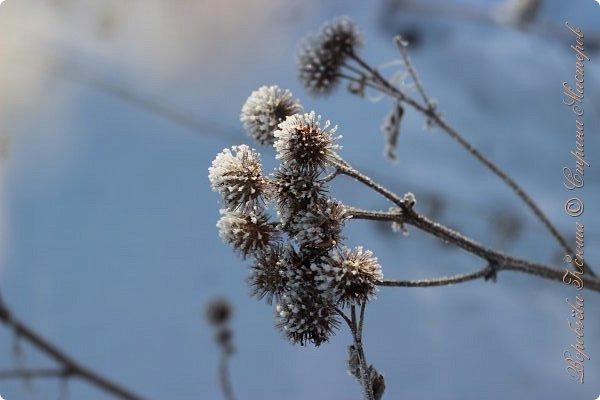 Доброго времени суток друзья. Сегодня я наконец то выложила свои зимние фотографии этого года. Приятного просмотра! фото 46