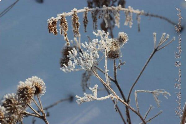Доброго времени суток друзья. Сегодня я наконец то выложила свои зимние фотографии этого года. Приятного просмотра! фото 47