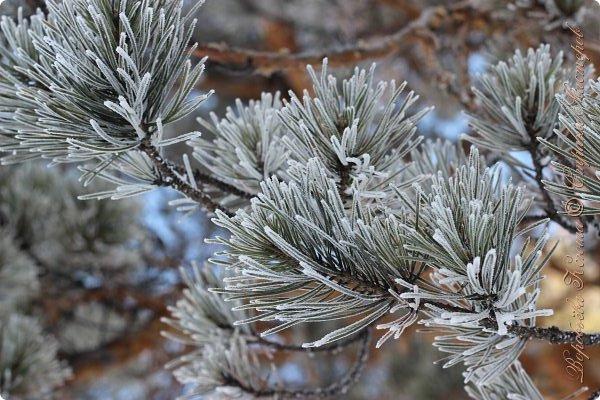 Доброго времени суток друзья. Сегодня я наконец то выложила свои зимние фотографии этого года. Приятного просмотра! фото 55