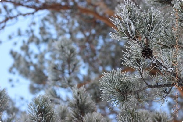 Доброго времени суток друзья. Сегодня я наконец то выложила свои зимние фотографии этого года. Приятного просмотра! фото 56