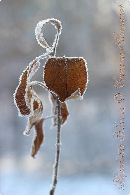 Доброго времени суток друзья. Сегодня я наконец то выложила свои зимние фотографии этого года. Приятного просмотра! фото 53