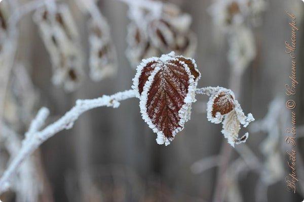 Доброго времени суток друзья. Сегодня я наконец то выложила свои зимние фотографии этого года. Приятного просмотра! фото 54