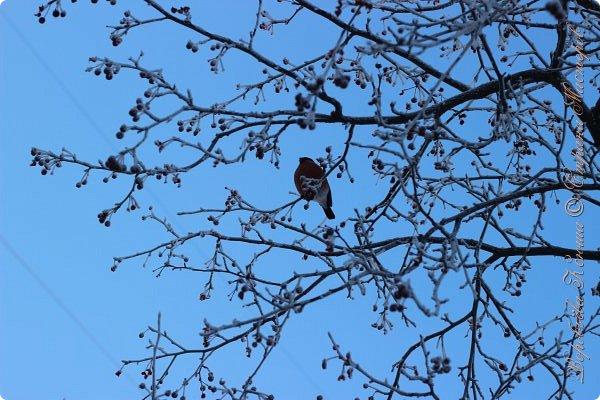 Доброго времени суток друзья. Сегодня я наконец то выложила свои зимние фотографии этого года. Приятного просмотра! фото 58