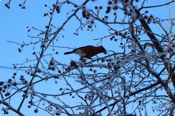 Доброго времени суток друзья. Сегодня я наконец то выложила свои зимние фотографии этого года. Приятного просмотра! фото 57