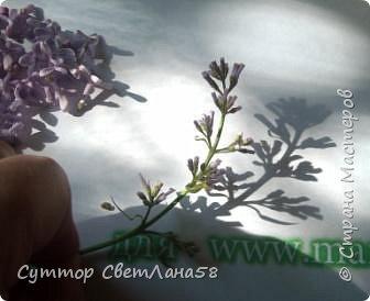 Скоро зацветёт сирень ! У нас появится возможность изготовить для себя - любимых веточку сирени с предоставленного природой образца ! Намного легче лепить любой цветок с натуры.Можно ,для начала, слепить имитацию сирени- брошь, кулон или очень маленькие веточки для небольших букетиков.  На фото живая веточка и моя ( здесь ещё не законченная)  фото 18