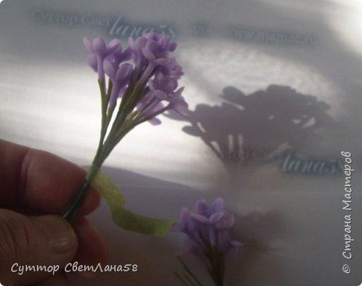 Скоро зацветёт сирень ! У нас появится возможность изготовить для себя - любимых веточку сирени с предоставленного природой образца ! Намного легче лепить любой цветок с натуры.Можно ,для начала, слепить имитацию сирени- брошь, кулон или очень маленькие веточки для небольших букетиков.  На фото живая веточка и моя ( здесь ещё не законченная)  фото 36
