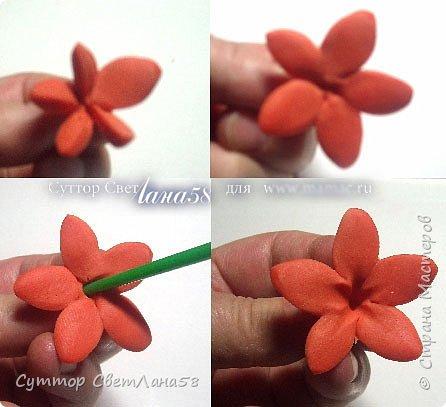 Сегодня научимся раскатывать цветочки из 4 и 5 лепестков  фото 15