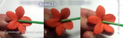 Сегодня научимся раскатывать цветочки из 4 и 5 лепестков  фото 16