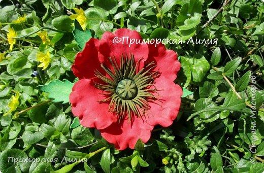 Мне яркие цветы мака всегда дарят тепло и летнее, солнечное настроение... Вот такой комплект украшений я сделала на днях: ободок и заколка-брошь. фото 5