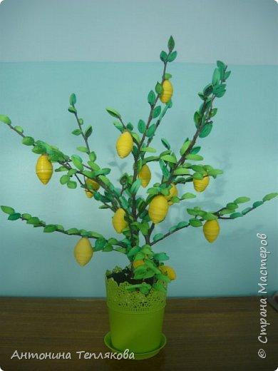 """Это лимонное дерево я сделала в технике квиллинг вместе со своими детьми  для городского конкурса """"Юный исследователь"""". Моя воспитанница Зотова Даша представила на городском конкурсе исследовательский проект """"Лимон - чудо природы"""" и заняла 3 место."""